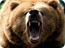 Frowning Bear